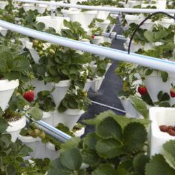 Cultivos hidropónicos | Cultivos Hidropónicos | Scoop.it