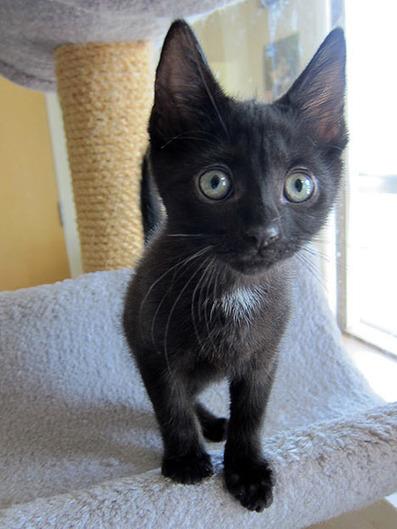 Three Black Cats « Sundays at the Shelter | Good Advice | Scoop.it
