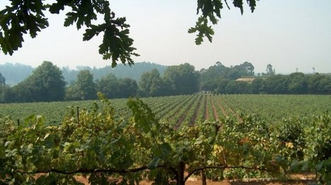 You Should Be Drinking Portuguese Wines   Wired Wines of Alentejo   Scoop.it