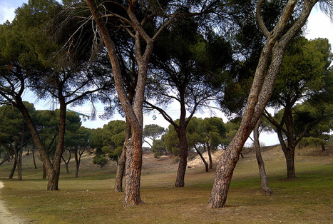 Casa de Campo in Madrid offers easy hiking or walking trails | Sophisticated Spain | Scoop.it