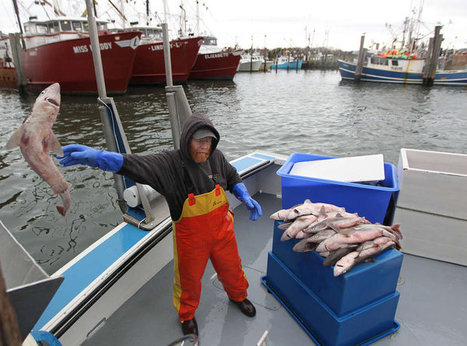 N.J. fishing industry works to recover from Sandy | Earth's Biomes: Maintaining a Balance | Scoop.it