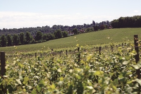 Funding for project to define the character of English sparkling #wine | Vitabella Wine Daily Gossip | Scoop.it