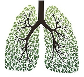 The 9 Best Herbs for Lung Cleansing and Respiratory Support | LOCAL HEALTH TRADITIONS | Scoop.it