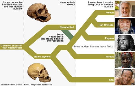 Hyoid bone analysis supports hypothesis that Neanderthals could talk | Amazing Science | Scoop.it