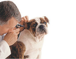 How To Pick The Best Vet | Selecting the Best Animal Hospital in Tucker | Scoop.it