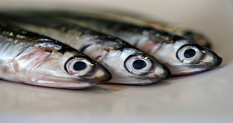 Our Massive Hunger For Sustainable Seafood Isn't Actually Sustainable | On the Plate | Scoop.it