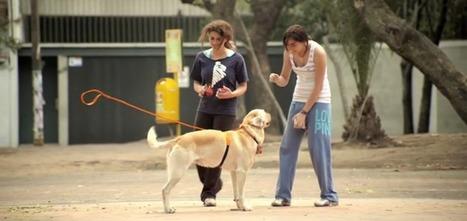 Le chien de l'homme invisible | Veille Marketing et Emarketing | Scoop.it