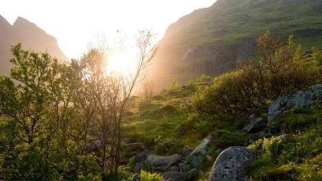 Discover how Norway saved its vanishing forests | GO Sustainable GO Versatile | Scoop.it