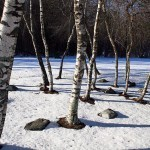 Birch Syrup: A Maple Syrup Alternative | Eat Drink Better | Latvian cuisine | Scoop.it