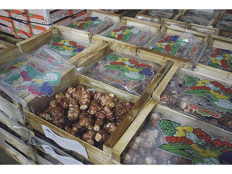 Légumes frais : Toujours plus d'innovations - Paysan Breton | Projet de DA Julia | Scoop.it