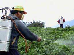 PROTECCION AMBIENTAL: Exceso de fertilizante y productos químicos, causa de contaminación ambiental | Agua | Scoop.it