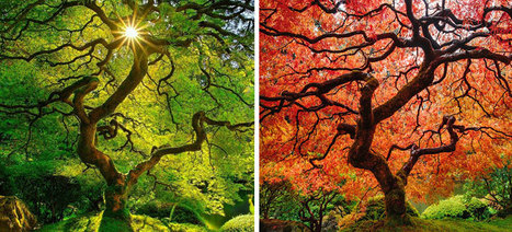 12 Before And After Photos That Reveal The Beautiful Transformations Of Autumn | 16s3d: Bestioles, opinions & pétitions | Scoop.it