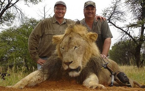 The American dentist who killed Cecil the Lion in Zimbabwe | Nature Animals humankind | Scoop.it