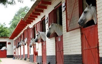 Study: Stable Studs Strategically for Better Sperm Quality | Cheval | Scoop.it