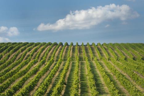 Microbiologie et vin : testez vos connaissances | vin et vinification, dernières avancées | Scoop.it