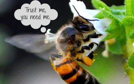 When Bees Go Extinct, These 10 Foods Will Follow [INFOGRAPHIC] | Healing our planet | Scoop.it