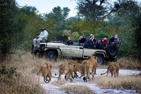 Plan Exploratory Africa Group Safari Tour :: african safari   Safaris in India & Africa   Scoop.it