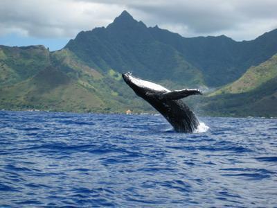 Japon : des drones pour empêcher la pêche à la baleine - Sciences - TF1 News | La passion de la mer : protection des espèces, littérature, blue society | Scoop.it