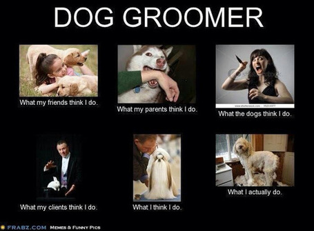 Dog Groomer | What I really do | Scoop.it