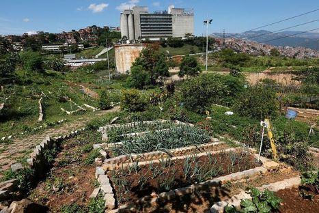 Le jardinage pour lutter contre la pénurie au Venezuela | Venezuela | Scoop.it