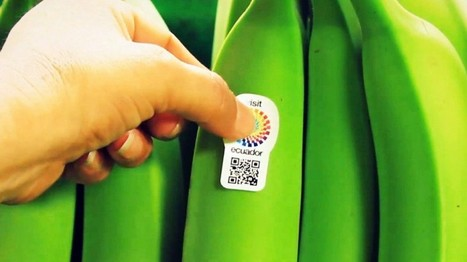 Equador usa QR code em banana para promover turismo | QRCoded | Scoop.it
