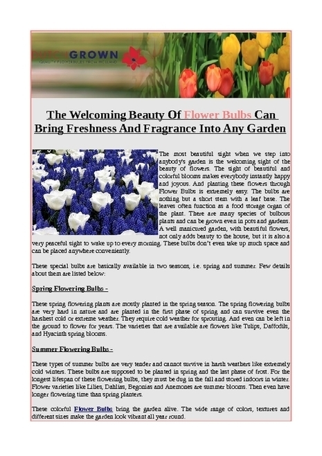 The welcoming beauty of flower bulbs can bring freshness and fragrance into any garden - PDF | Flower Bulbs | Scoop.it