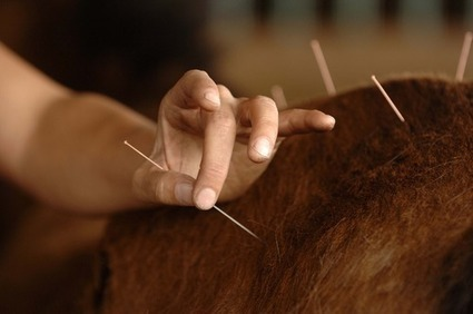 Using Acupuncture to Diagnose and Treat Lameness in Horses | all things horsey | Scoop.it