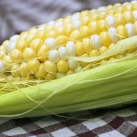 A Chinese Spy Stole Millions in Corn Seeds from Monsanto | MAIZE | Scoop.it