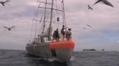 La Goélette Tara part explorer le plancton du pôle Nord - France Info | TARA | Scoop.it