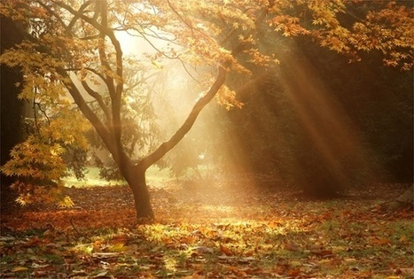 Autumn landscapes – expert tips on taking great photographs - The Guardian | LIGHTROOM and photography | Scoop.it