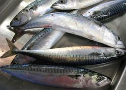 World Fishing - MSC to suspend mackerel certification | OUR OCEANS NEED US | Scoop.it