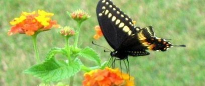 How to Rise Above Butterfly Conversations | Corporate University | Scoop.it