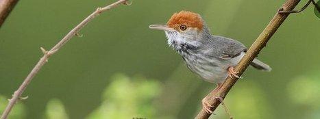 New bird species spotted in big city | 100 Acre Wood | Scoop.it