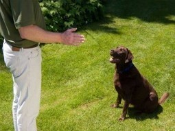 Use Bark Busters Home Dog Training's services in Las Vegas, NV.   Bark Busters Home Dog Training   Scoop.it