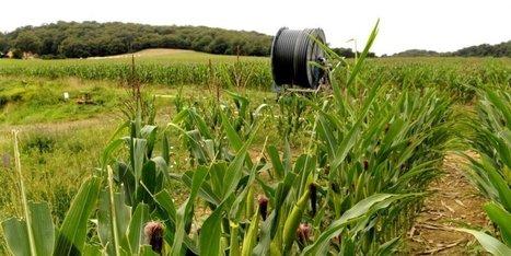 Béarn : la Sepanso porte plainte après des épandages de glyphosate | Agriculture en Pyrénées-Atlantiques | Scoop.it