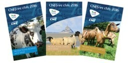 Chiffres clés des filières bovine, ovine et caprine 2016 - Idele | SCIENCES DE L'ANIMAL | Scoop.it