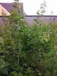 Du Sauvage au Jardin Bio | Conseils Jardinage Bio | Jardin écologique | Scoop.it