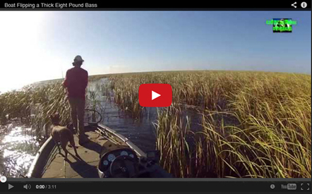 Boat Flipping a Thick Eight Pound Bass - AnglingAuthority.com   Fishing - How To   Scoop.it