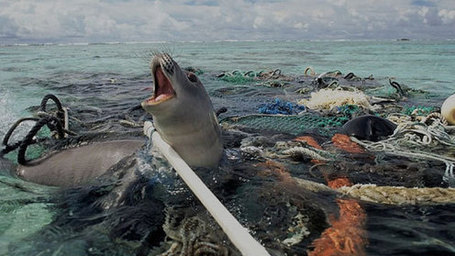 """When The Mermaids Cry: The Great Plastic Tide"" VIDEO : Why Does Your Fish Taste Like Plastic? 