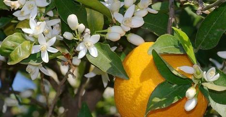 Fleur d'Oranger pour l'hiver 2013, sélection de 4 produits à la ... - meltyFashion | L'Occitane en Provence | Scoop.it