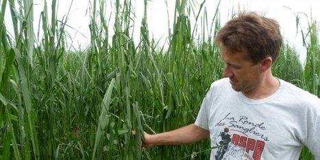 Dordogne : de gros grêlons ont détruit ses cultures de maïs | Agriculture en Dordogne | Scoop.it