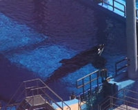 Petition | Free Tilikum From Sea World Captivity | English | Science and Nature | Scoop.it