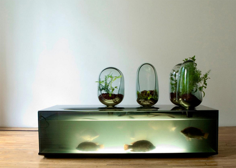 Local River: Farm Your Own Fish in This Self-Sustaining Ecosystem | Chummaa...therinjuppome! | Scoop.it