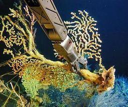Deep-sea corals record dramatic long-term shift in Pacific Ocean ecosystem | Sustain Our Earth | Scoop.it