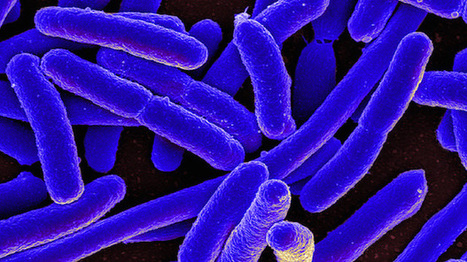 Controlling Synthetic Bacteria | Synthetic Biology | Scoop.it