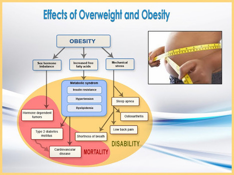 Highlight the Main Effects of Overweight and Obesity with PPT Templates   Current Events   Scoop.it