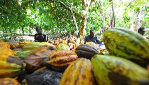 Le Cameroun veut construire dix nouvelles unités de transformation de cacao | Questions de développement ... | Scoop.it