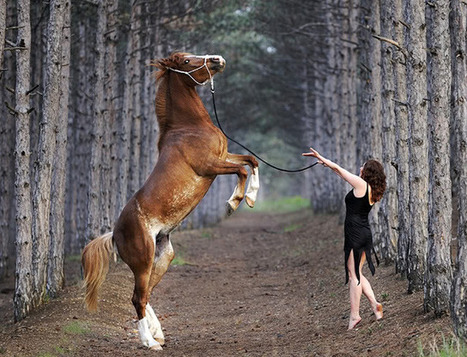 Horse photographs | Incredible Snaps | The Blog's Revue by OlivierSC | Scoop.it