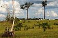 The battle for Brazil's rainforest | JWK Geography | Scoop.it