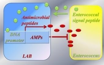 Engineered Bacteria Target Antibiotic-Resistant Pathogens - The Biological SCENE | General Microbiology | Scoop.it